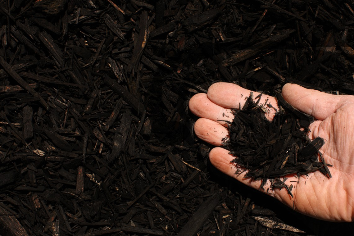 black shredded hardwood mulch hand