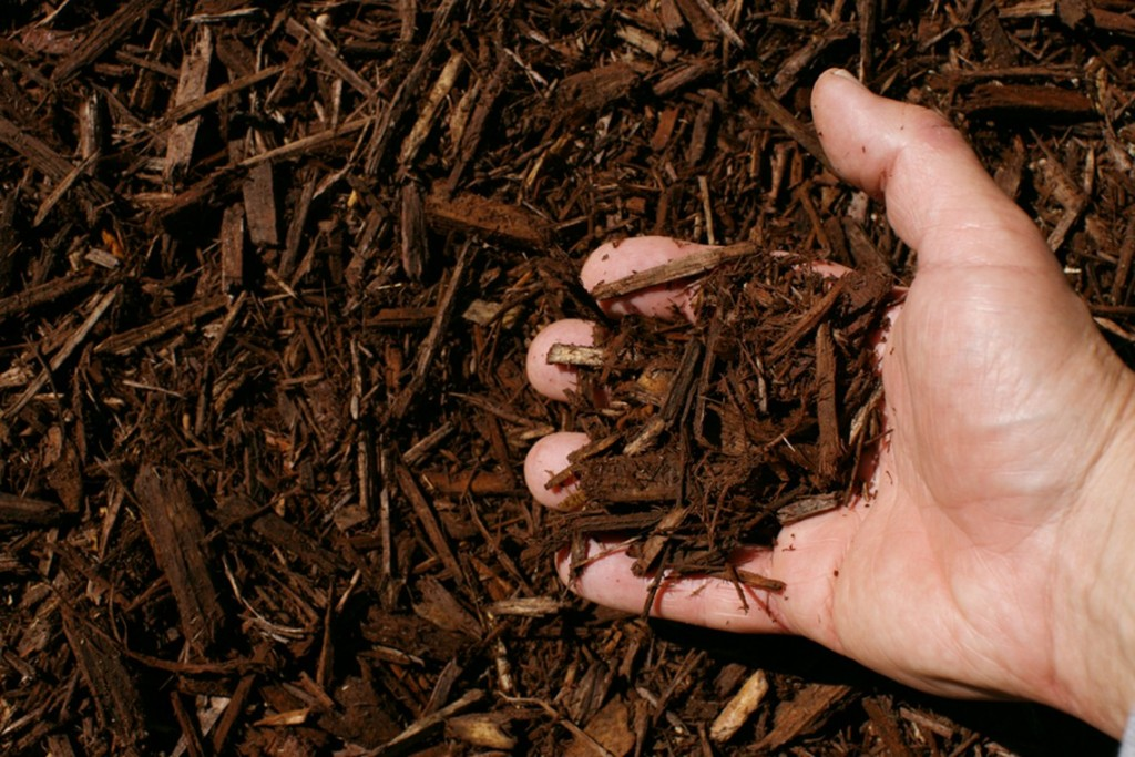 dark brown shredded hardwood mulch hand 1024x683