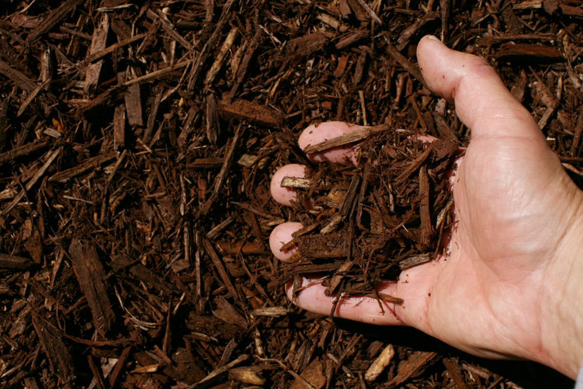 dark brown shredded hardwood mulch hand