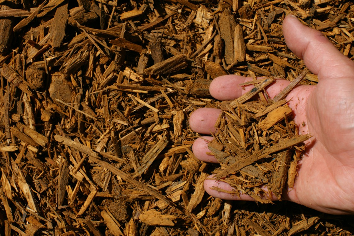 gold shredded hardwood mulch hand