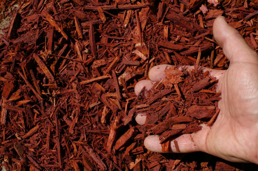 red shredded hardwood mulch hand 1024x682