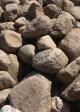 Granite Boulders - 9-12 in.