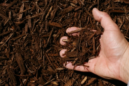 dark brown shredded hardwood mulch hand 1024x683 960x300