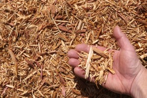 eastern red cedar mulch hand 300x200