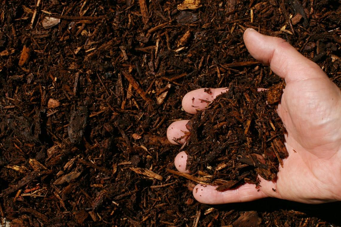 hemlock mulch hand