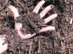 left hand holding mulch 960x300