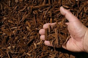 light brown shredded hardwood mulch hand 300x200