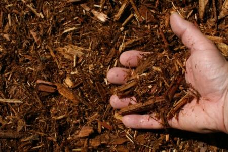 western red cedar mulch hand 1024x682 960x300