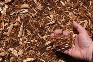 white cedar mulch hand 300x200