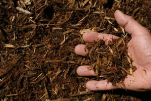 oak bark mulch single shredded hand 300x200