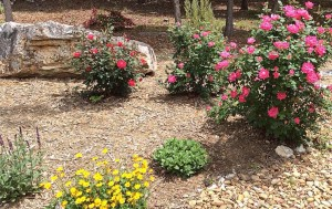 buy mulch for your landscape 300x189