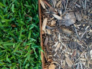 green grass next to bark mulch 300x225
